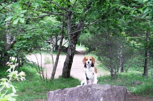 天女山の岩の上に座るミックス犬