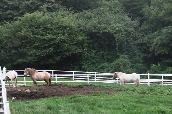 八ヶ岳牧場まきば公園の馬たち