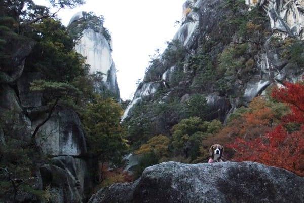 覚円峰と愛犬