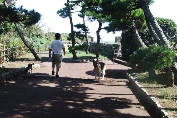 城ヶ島公園を走るシェパードとミックス犬