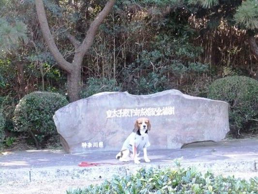 城ヶ島公園で座るミックス犬