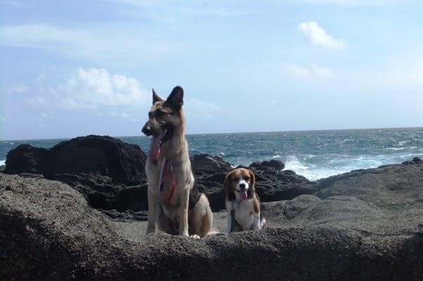 城ヶ島海岸で並んで座るシェパードとミックス犬
