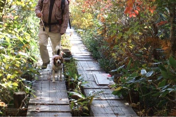 玉原高原での愛犬