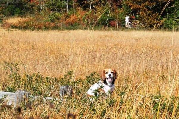 玉原高原湿原での愛犬