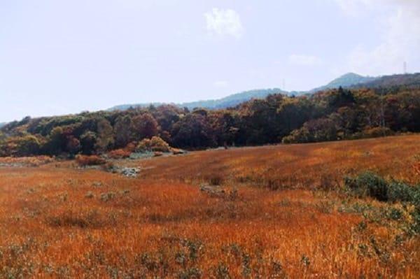 玉原高原湿原