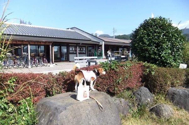 道の駅たくみの里前での愛犬