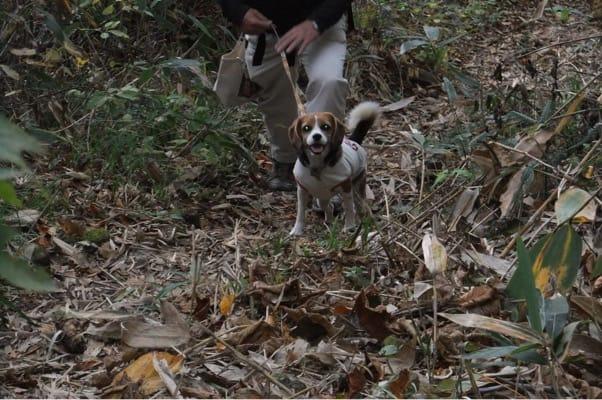 玉原高原ブナ平での愛犬