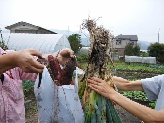 道の駅たくみの里の野菜