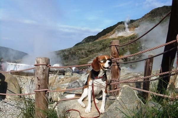 愛犬、大涌谷にて