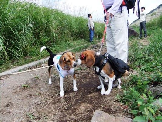 愛犬、仙石原すすき野原にて
