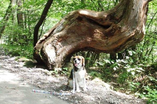 愛犬、横谷渓谷にて