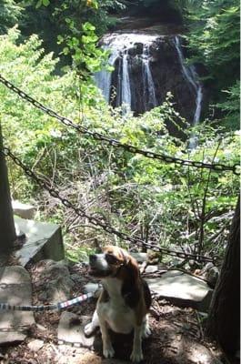 愛犬、横谷渓谷大滝にて