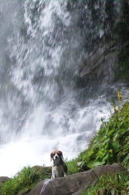 愛犬、横谷渓谷乙女滝にて