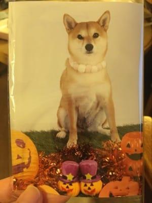 撮影スタジオで撮ってもらった愛犬の写真