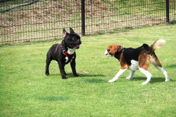 愛犬、ぐらんぱる公園ドッグランにて