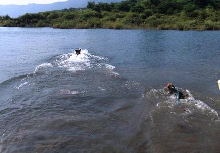 本栖湖で泳ぐ愛犬