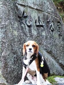 愛犬、丸山公園にて