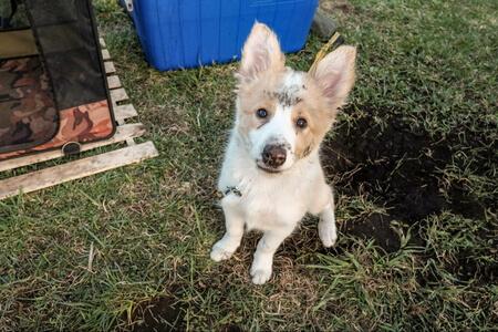 穴を掘って遊ぶ愛犬