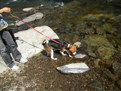 清津川での愛犬