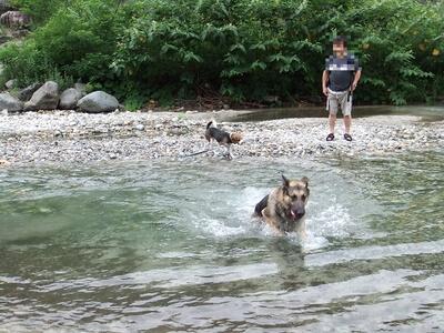 白馬の平川で遊ぶシェパードとミックス犬