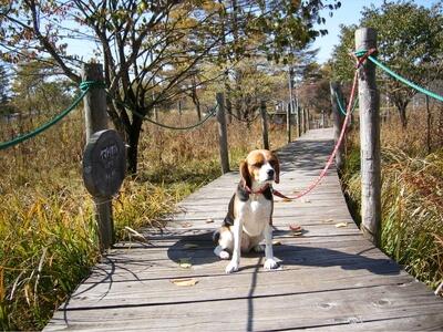 愛犬、霧ヶ峰にて