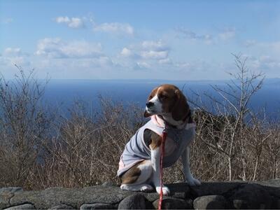 達磨山展望台に座るミックス犬