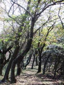 大平の森ハイキングコース
