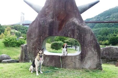 秦野戸川公園での愛犬達
