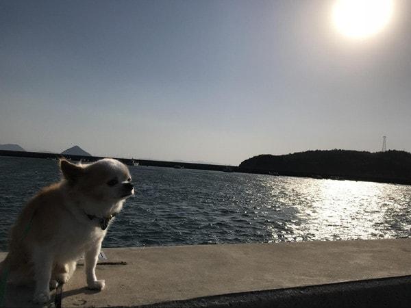 直島の宮浦港にたたずむ愛犬マメぞう