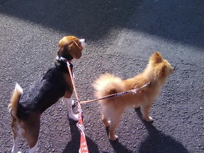 保護犬ちょろを連れて散歩しながら飼い主を探していた頃