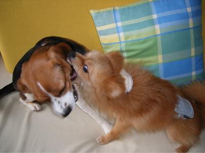 蕾と保護犬ちょろ