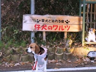 仔犬のワルツの看板前に座るミックス犬