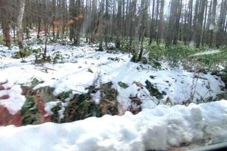 戸隠へ向かう車中から撮影した雪