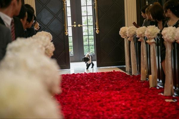 愛犬がリングを届けに入場の場面、リングドッグの大役