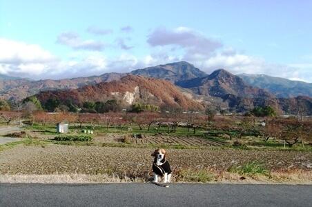 川中島古戦場跡公園から千曲川方面を望む