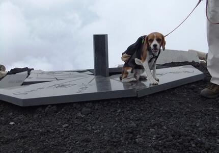 愛犬、宝永山山頂にて