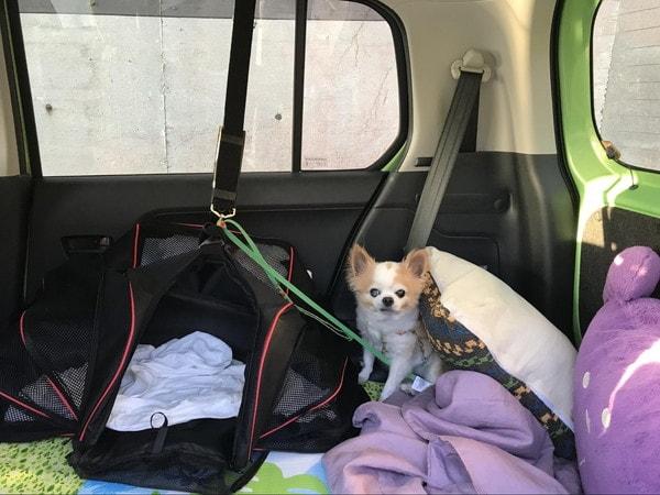 車中での愛犬マメぞう