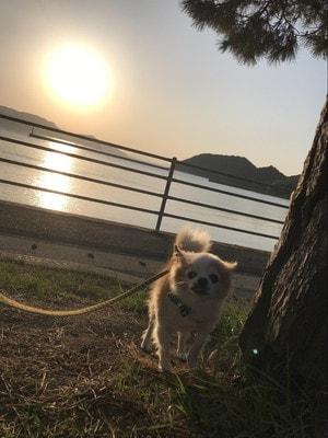 直島の陽の出と愛犬マメぞう