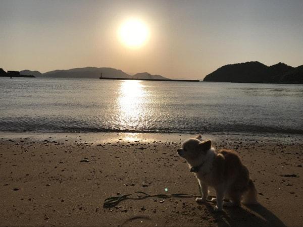 直島の陽の出
