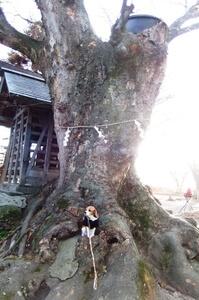 川中島古戦場跡公園御神木と愛犬
