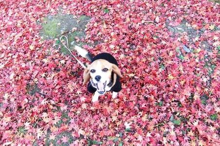 川中島古戦場跡公園、紅葉と愛犬