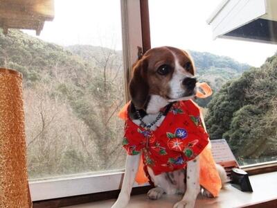 仔犬のワルツの客室に座るミックス犬