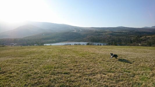 草原サイトで走り回る愛犬