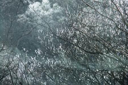 戸隠へ向かう車中から撮影した霧氷