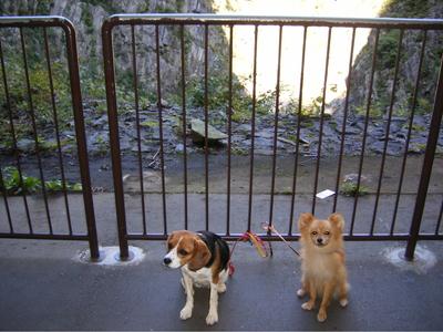 清津峡トンネル見晴台での愛犬