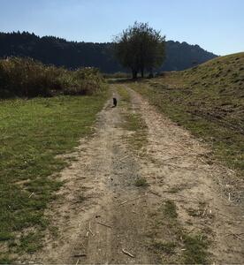 土の上を思いっきり走るトイプードル