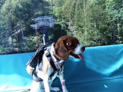 愛犬、富士見パノラマリゾートゴンドラにて