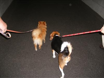 清津峡トンネルを歩く愛犬