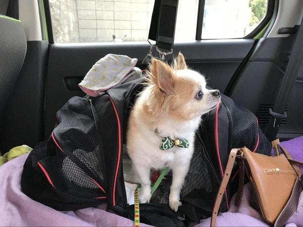 フェリーの車内での愛犬マメぞう