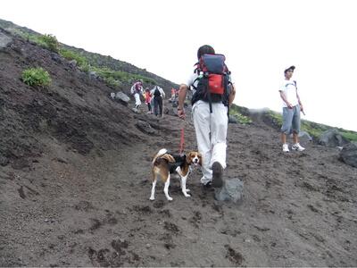 愛犬、富士宮口ルートにて